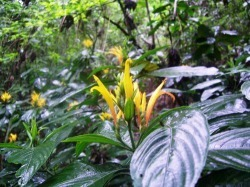 Las Escobas Rainforest