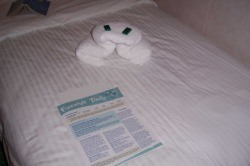 """A towel animal delivering our """"Freestyle Daily"""""""