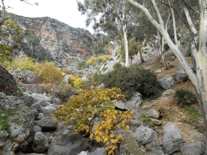 Talassemetane National Park in chefchaouen