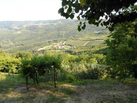 overlook at motovun croatia