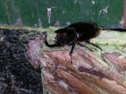 Wildlife at Bellavista