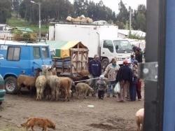 Saquisilí Animal Market