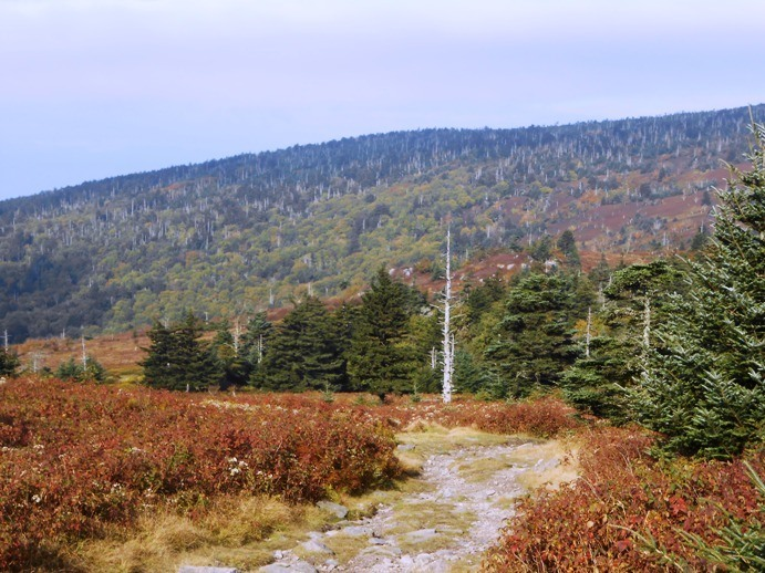 grayson highlands fall best hikes in virginia