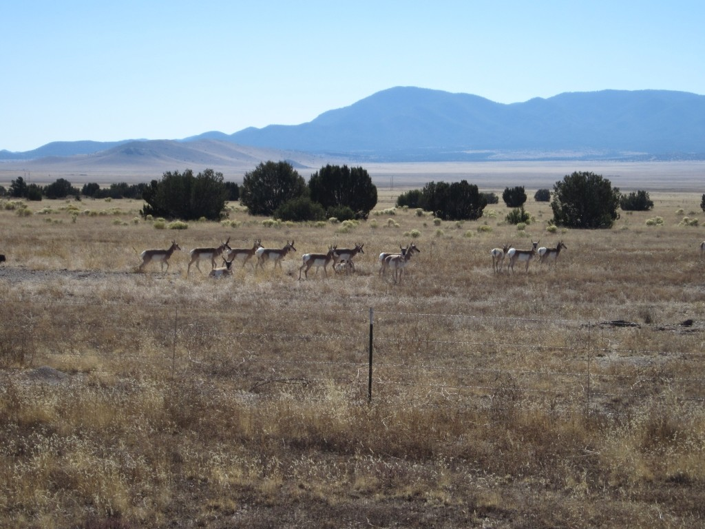pronghorn new mexico