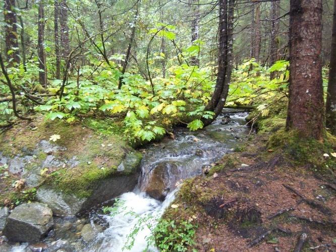 west glacier loop trail mendenhall glacier juneau alaska | glacier trekking juneau