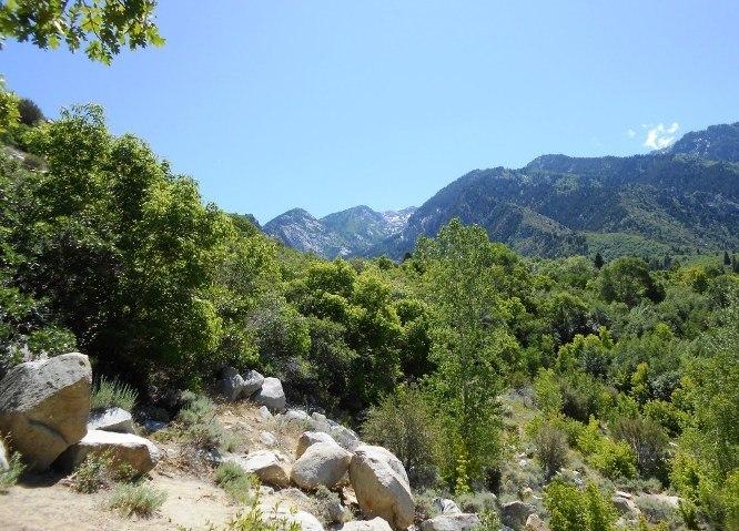 Cottonwood Canyon 2