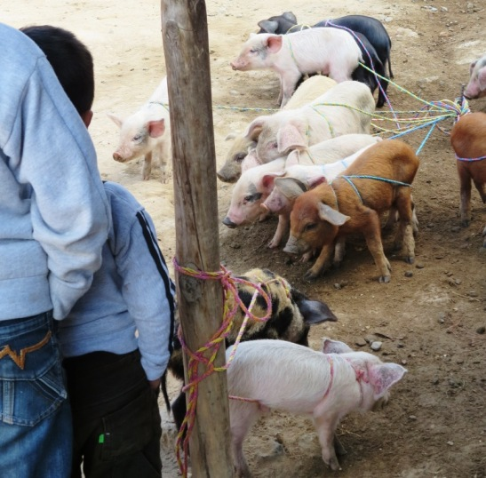 chichicastenango animal market