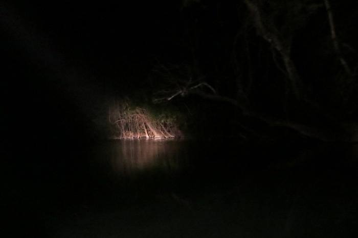 Heading out at night on a quest to find nocturnal animals on the riverbank