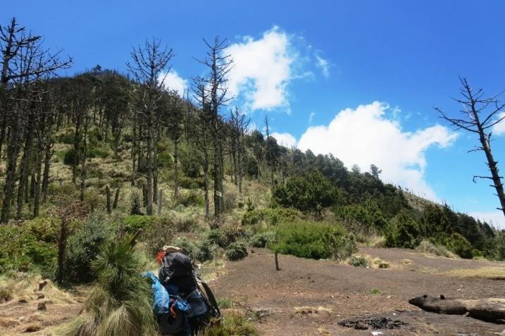 acatenango volcano guatemala trail 4