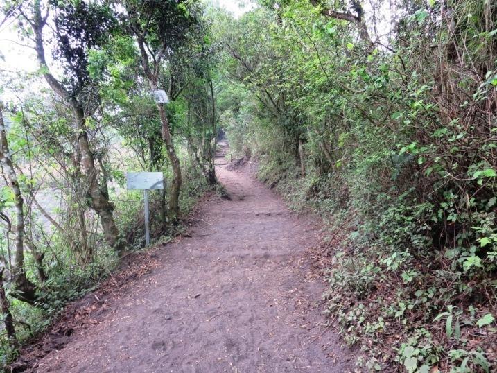 pacaya volcano guatemala trail hike
