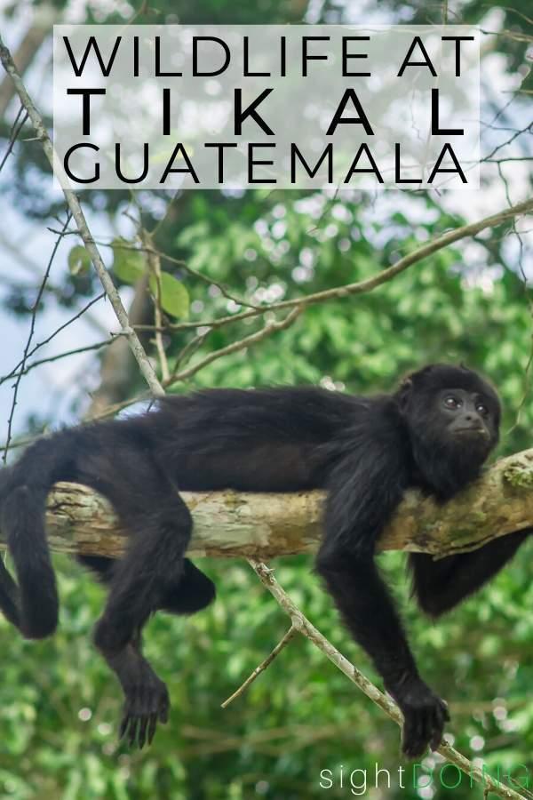 tikal guatemala wildlife