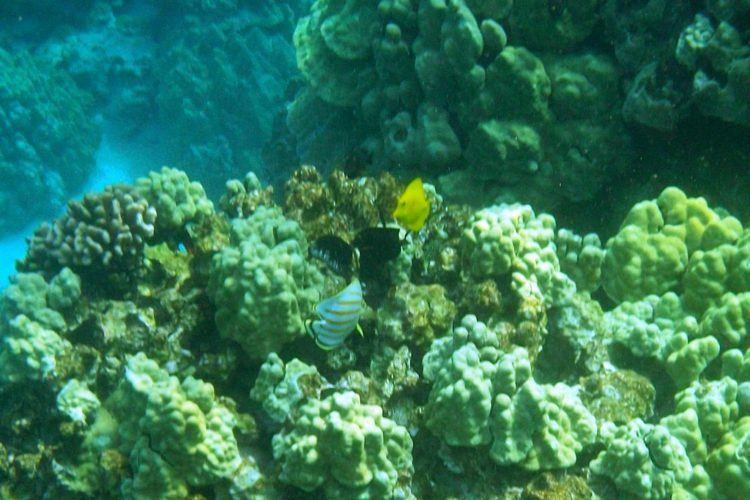 snorkel tour hawaii big island