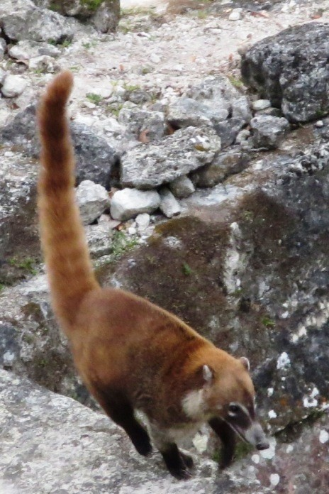 So much wildlife in Tikal Guatemala