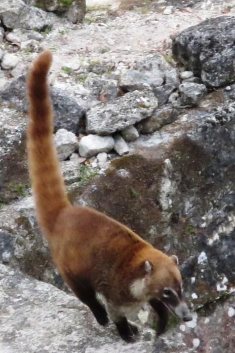 So much wildlife in Tikal Guatemala