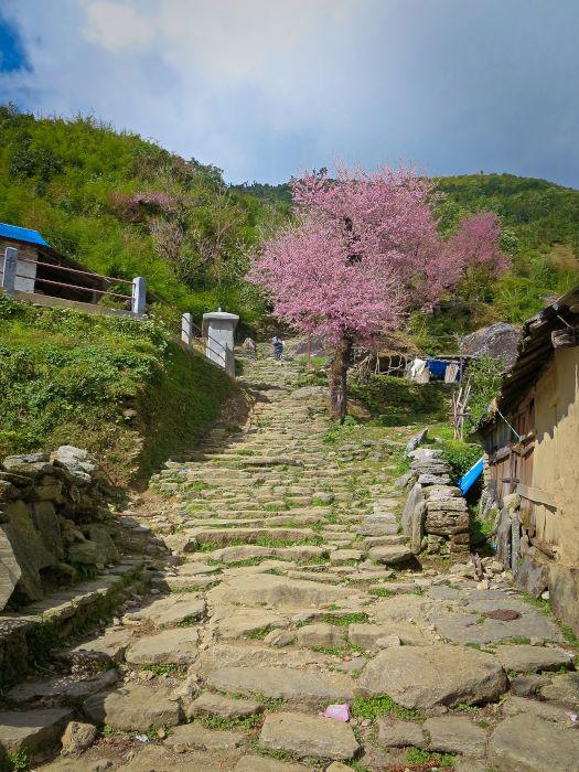 stone staircase along ghorepani poon hill trek in nepal