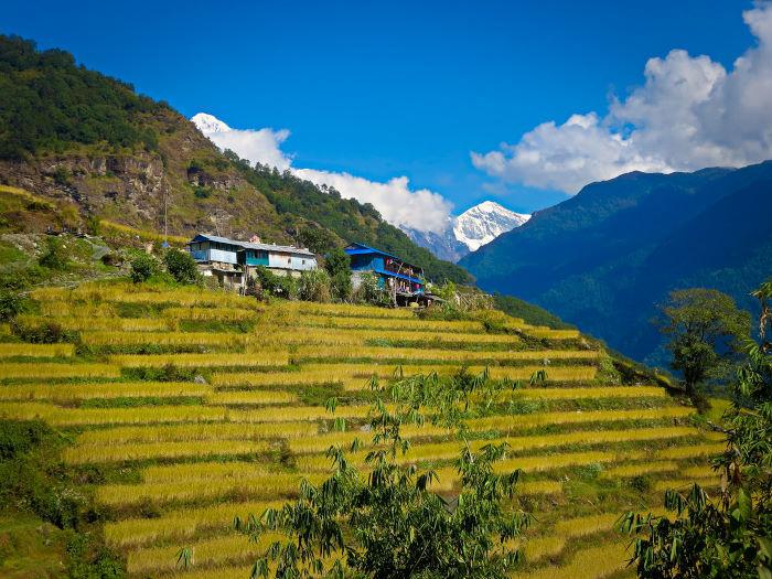 farms along the scenery on the ghorepani poon hill trek