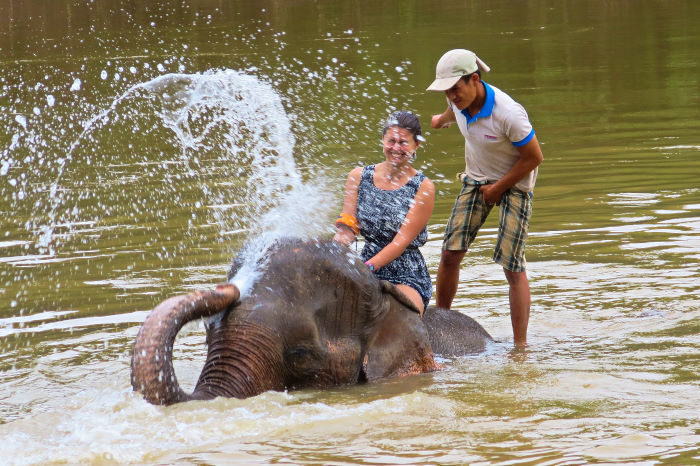 all lao elephant camp luang prabang laos