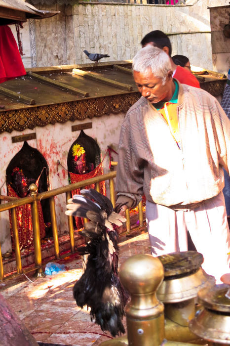 dakshinkali chicken sacrifice kathmandu