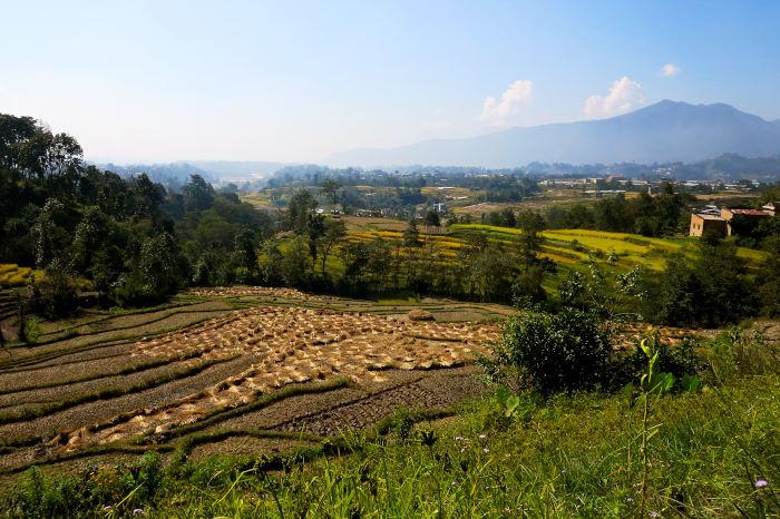 Kathmandu rice paddies