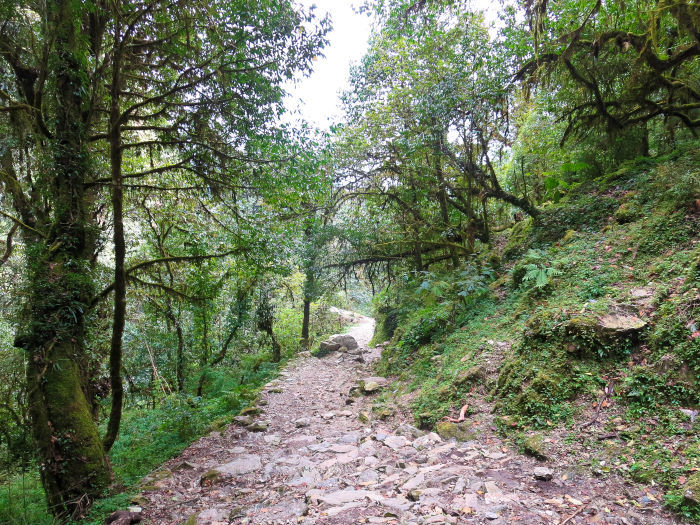 trail on the scenery on the ghorepani poon hill trek
