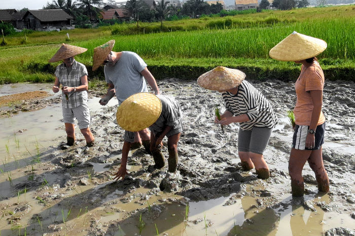 rice experience living land rice farm luang prabang laos-1