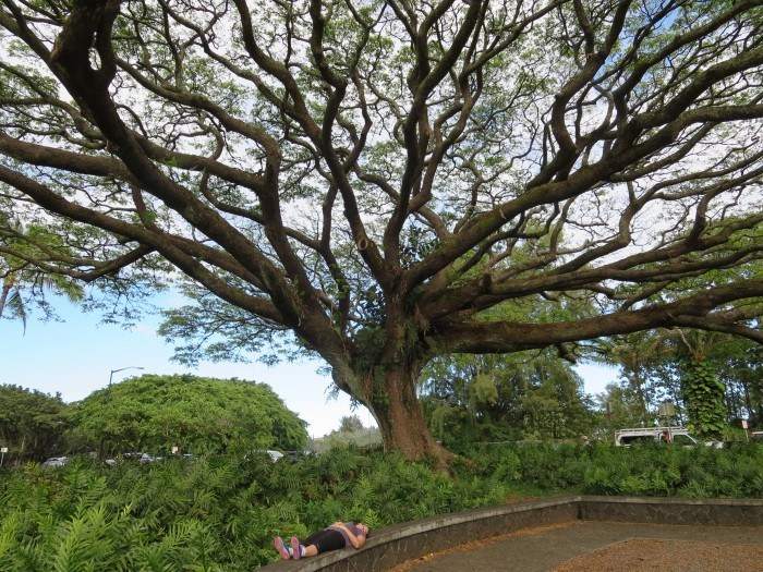 hilo hawaii | the big island of hawaii