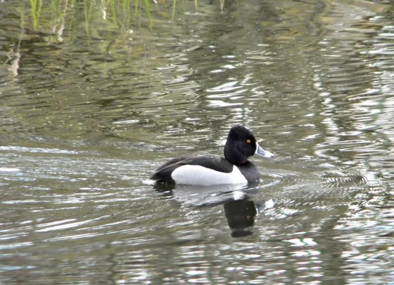 things to do in north dakota lake ilo national wildlife refuge