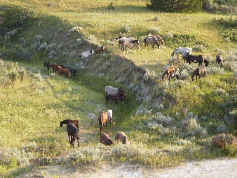 things to do in north dakota horses