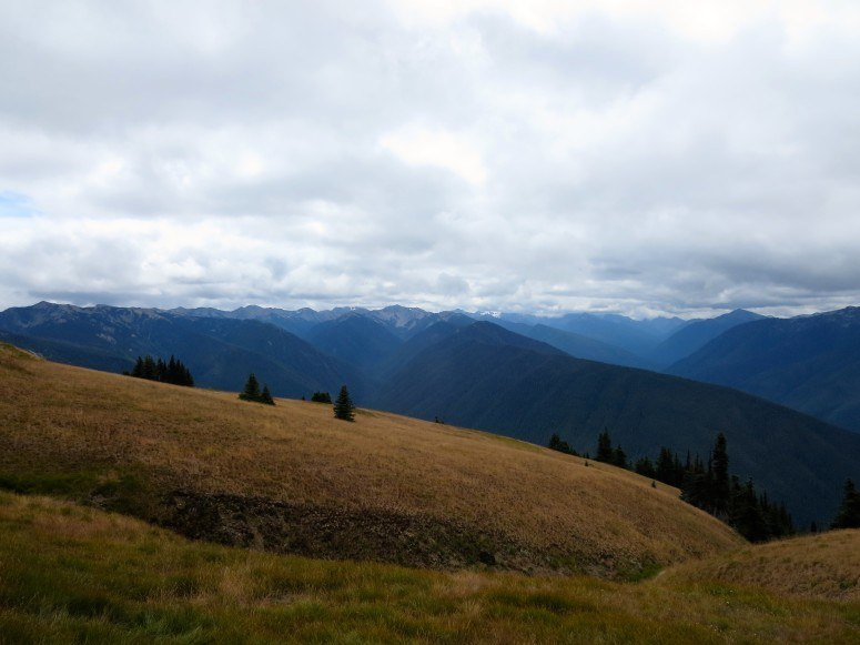Hurricane Ridge | Olympic National Park | Olympic Peninsula