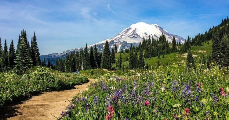 mount rainier with wildflowers