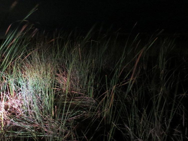 sawgrass prairies near fort lauderdale