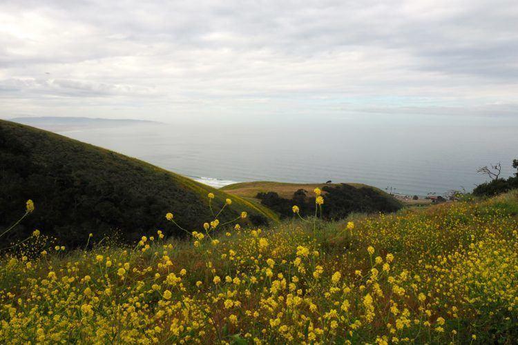 california coast pismo preserve