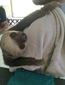 baby-sloth-2-779x1024