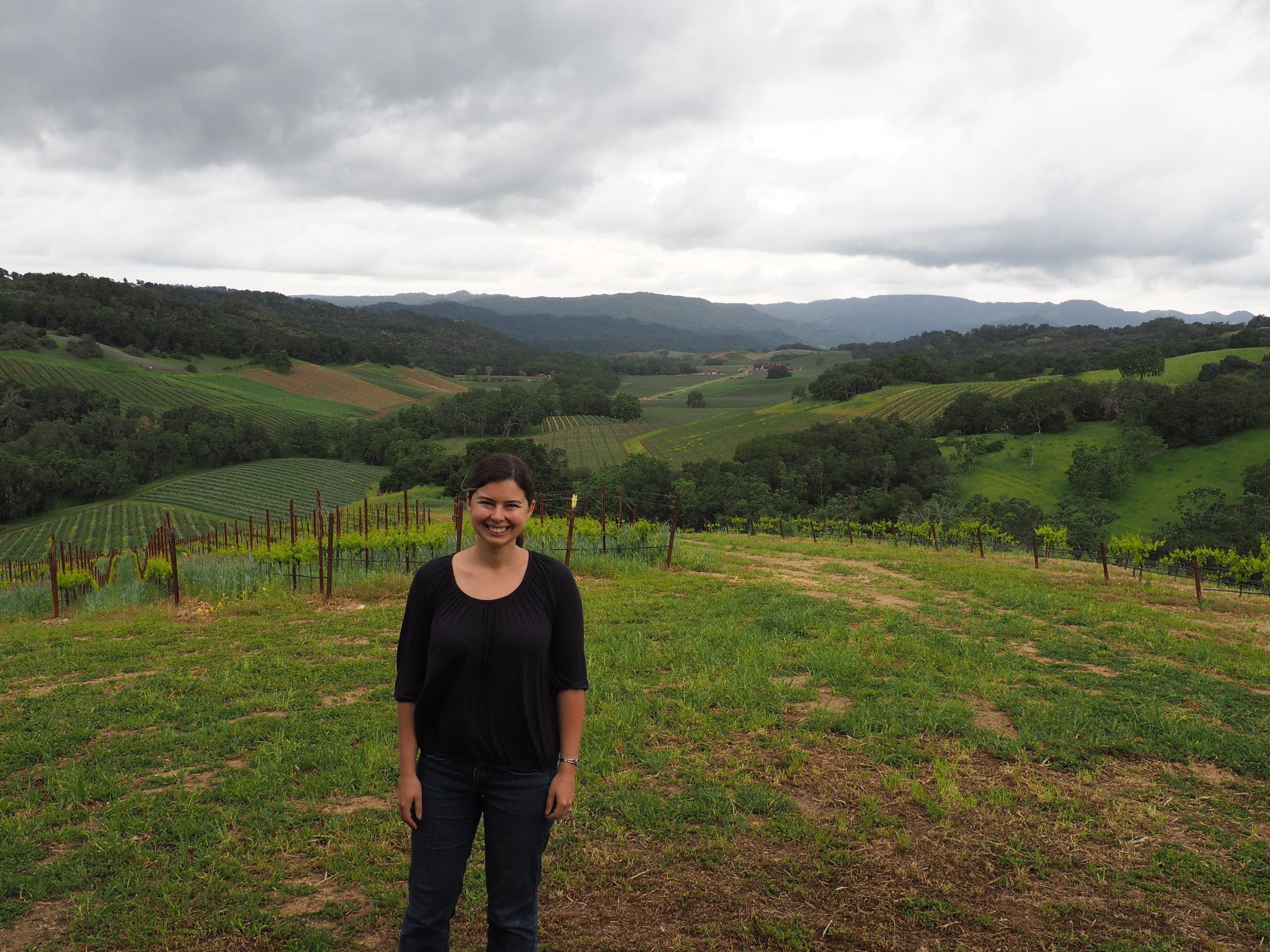 wine tasting in paso robles / lion's ridge at halter ranch vineyard excursion tour