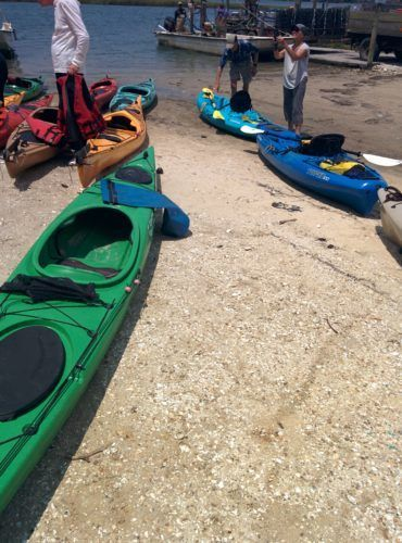 eastern shore kayak trip bayford va / CHATHAM VINEYARD KAYAK