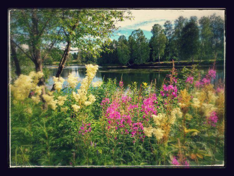 skelleftea-flowers
