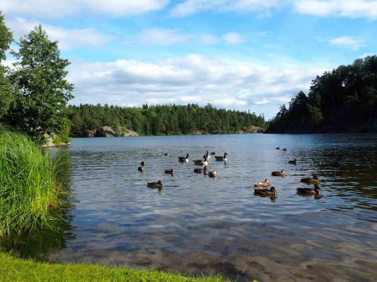 Nature Reserve in Stockholm