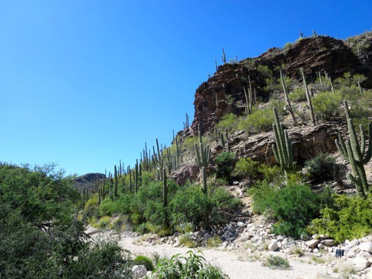 Sabino Canyon. I love it.