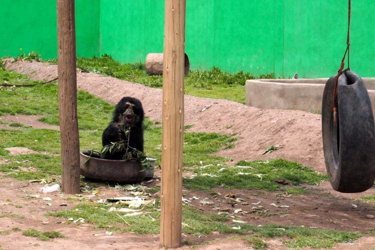animal sanctuary (things to do other than hiking the inca trail peru)