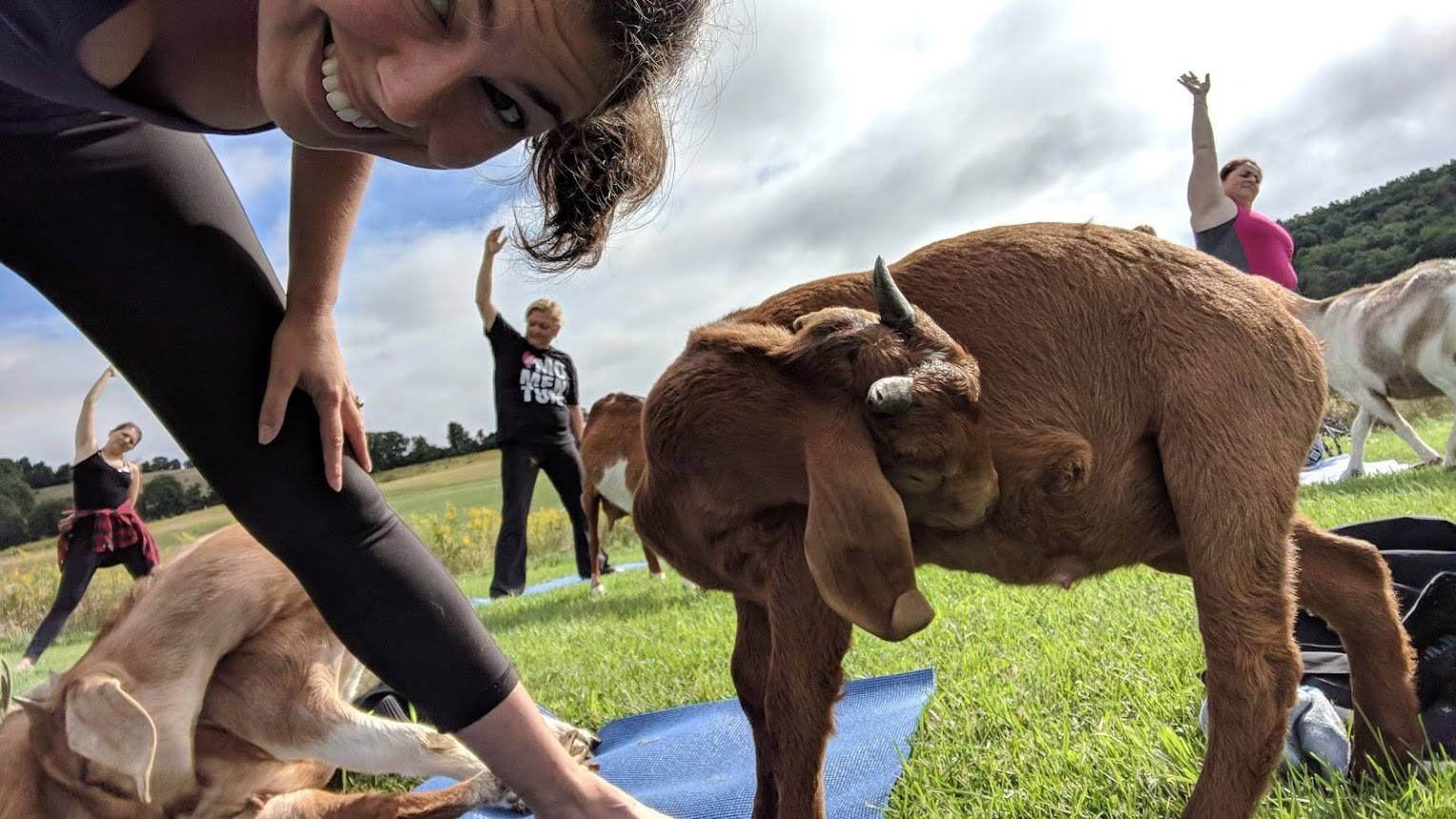 girl doing yoga pose with goat next to her