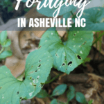 Have you ever tried foraging for food? Grab a basket and join this tour for beginners in Asheville North Carolina.