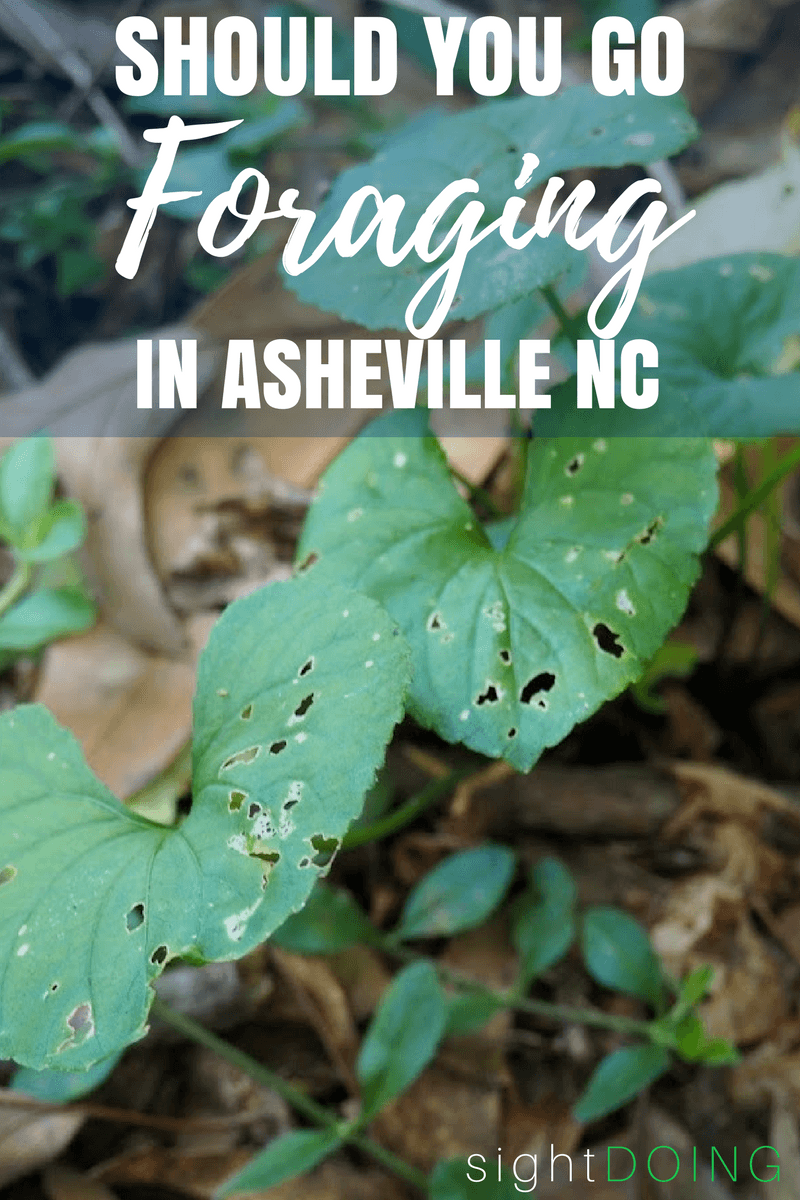 Have you ever tried foraging for food? Grab a basket and join this tour for beginners in Asheville North Carolina, definitely one of the most unique things to do there!