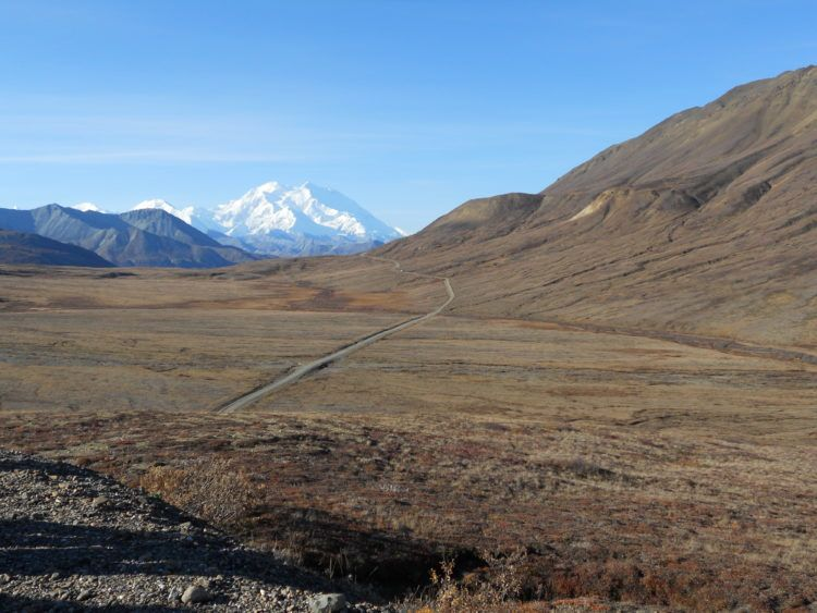 denali national park road (where to see wildlife in alaska)
