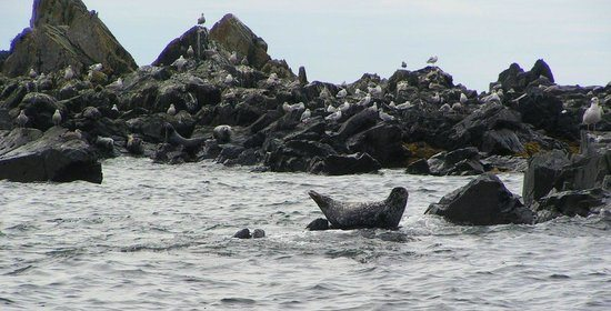 harbor seals where to see wildlife in alaska