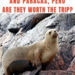 Ballestas Islands Worth It