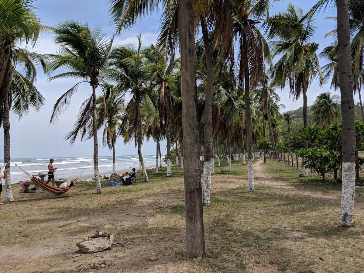 Palm Trees in Samara Costa Rica