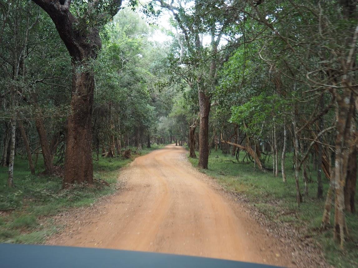 dirt roads in wilpattu national park