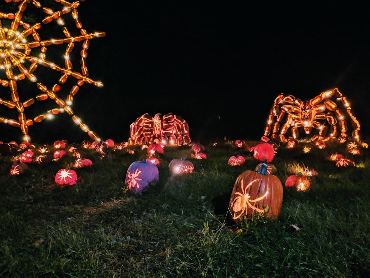 pumpkin blaze 5