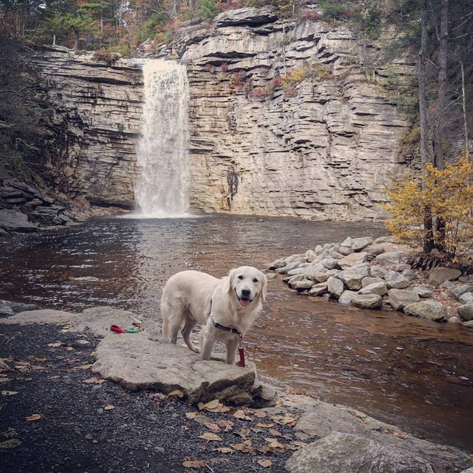 dog in front of waterfall at hudson valley ny