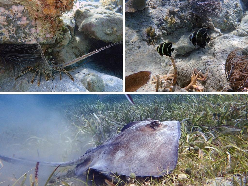 culebra snorkeling playa tamarindo